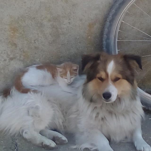 Perro perdido en Almazán, Soria 55564410