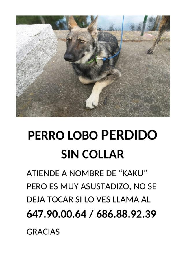Perro lobo perdido 586510