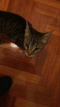 Gato encontrado zona Castrillón en A Coruña 666c0f10