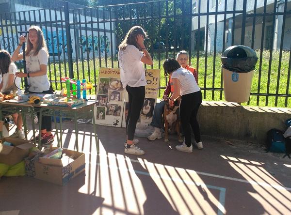 Mercadillo solidario CEIP de Prácticas de A Coruña a favor de Gatocan 21/06/2019 7_copi10
