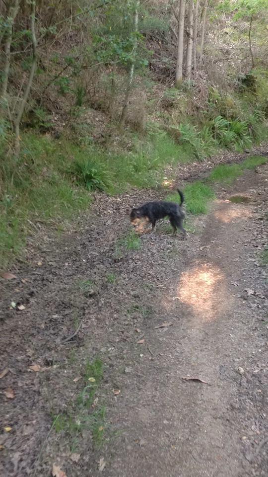 Dos perros perdidos Oza dos Ríos, aparecieron Bosco10