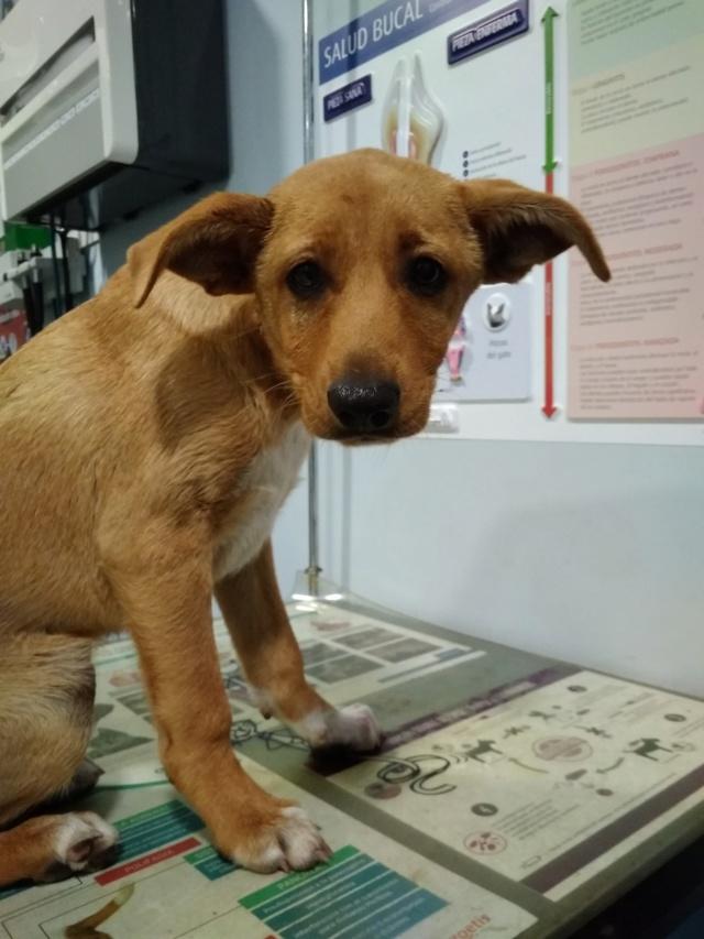 Cachorro encontrado en la carretera de las tablas a Brexo-Lema Cambre10