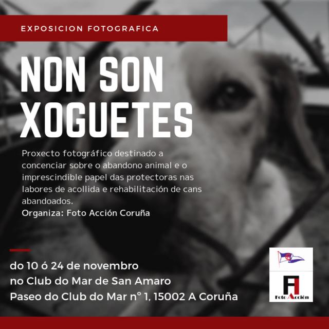Nueva exposición refugios de animales en el Club del Mar de San Amaro 10-24 noviembre Exposi10
