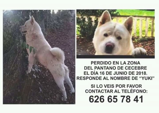 Perro perdido pantano de Cecebre Fb_img10
