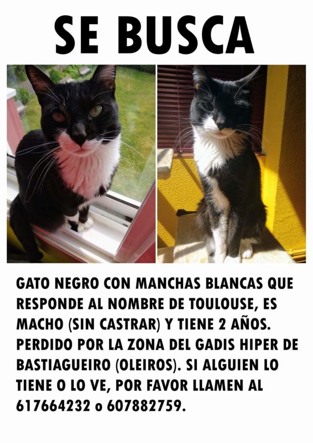 Gato perdido Oleiros Fb_img11
