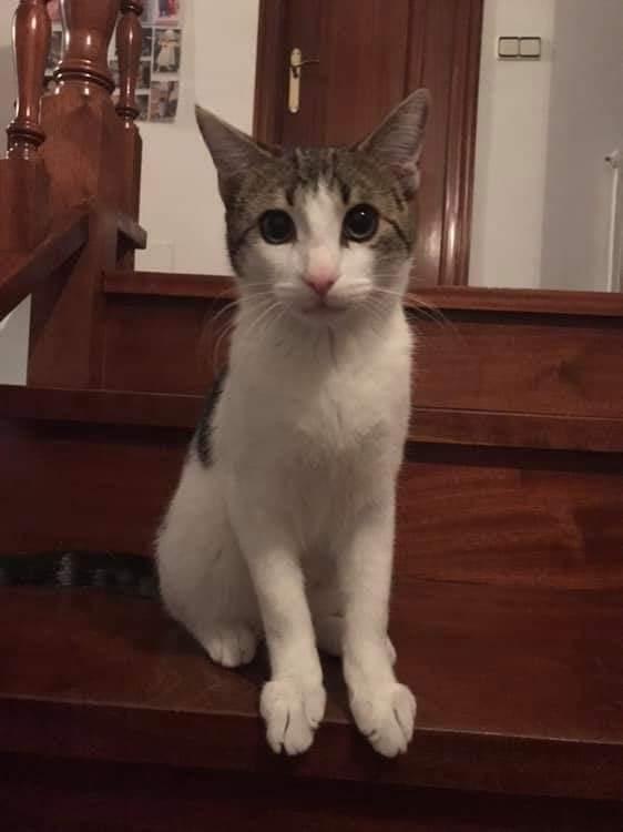 Gato perdido Gandario Fb_img18