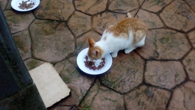 Gatito perdido en Frean Gatito13