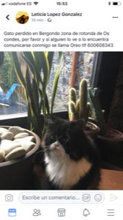 Gato Persa perdido en Bergondo zona rotonda Os Condes. Apareció sano y salvo!! Image110