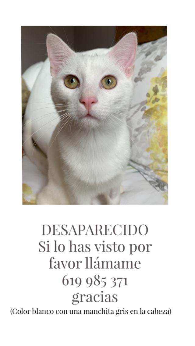 Gato perdido Bergondo Image210