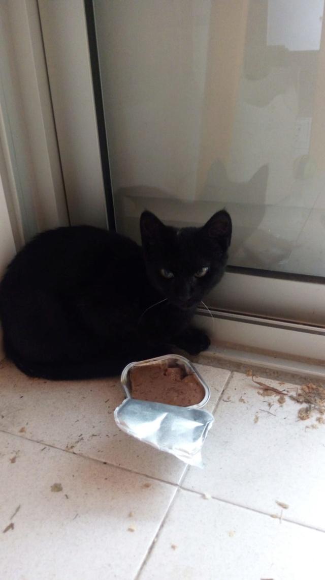 Gatito negro encontrado plaza Alfonso XIII Img-2049