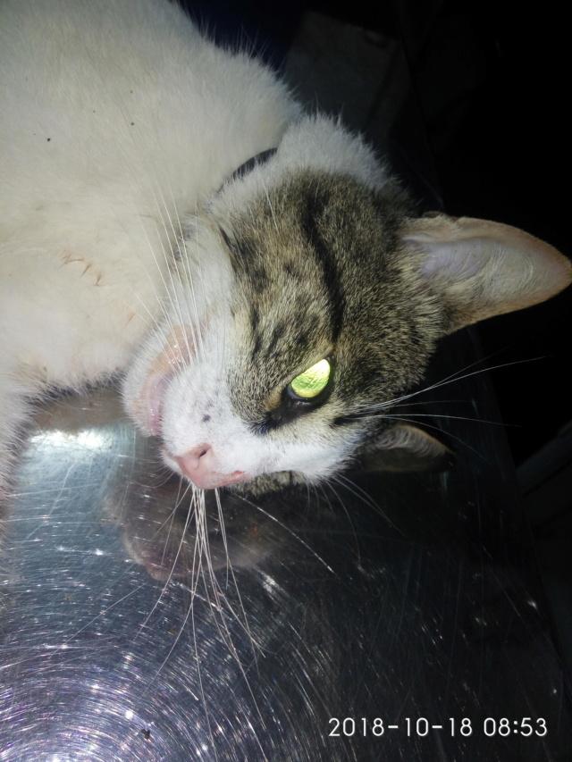 Gatiño encontrado atropellado Img_2040