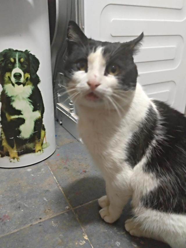 Gato casero encontrado en Santa Cruz Img_2056