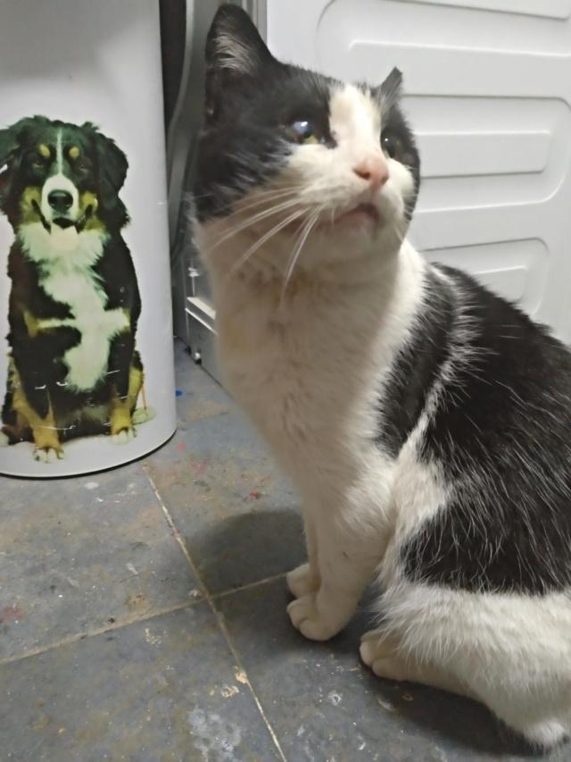 Gato casero encontrado en Santa Cruz Img_2057