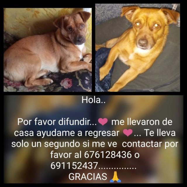 Perro perdido en Monfero Img_2067
