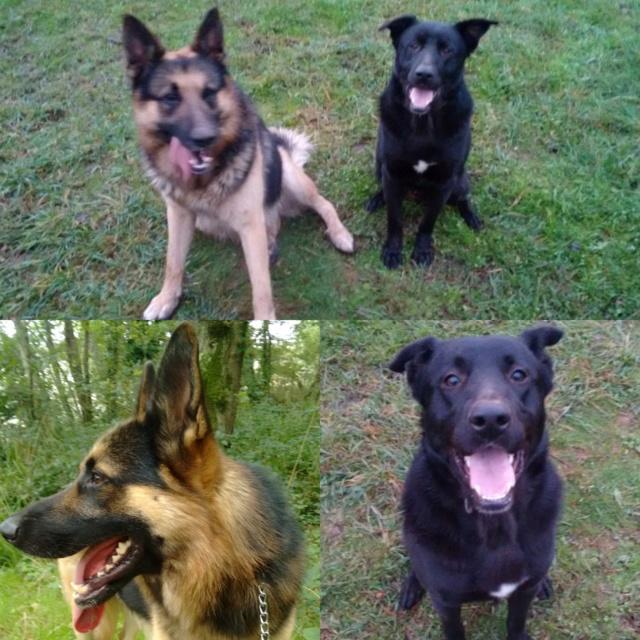 Perros perdidos Cambre. Ya están en casa!!! Img_2068