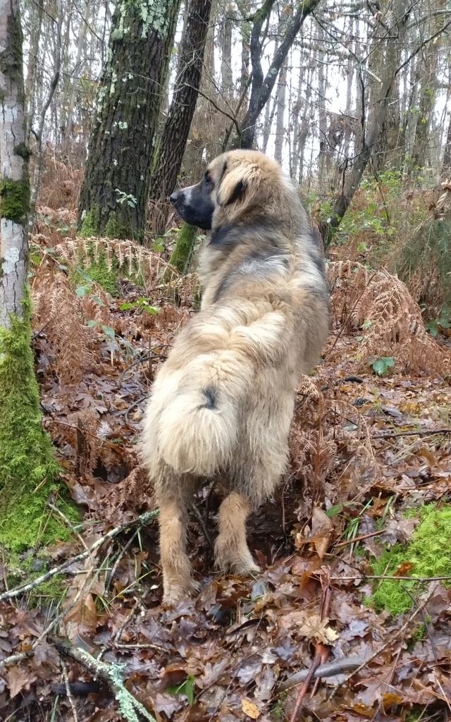 Alguien reconoce a este perro?? Img_2070