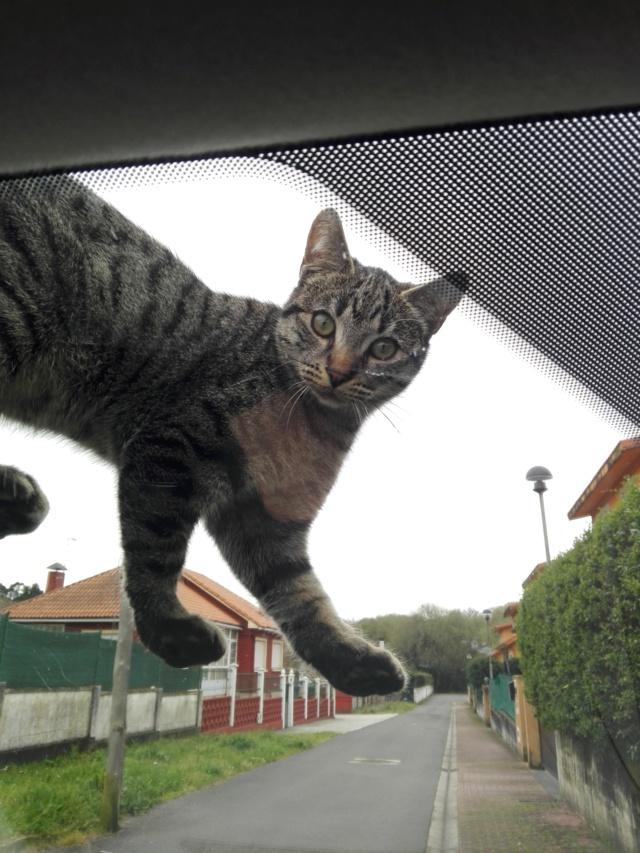 Gato perdido zona Mondego en Sada Img_2110