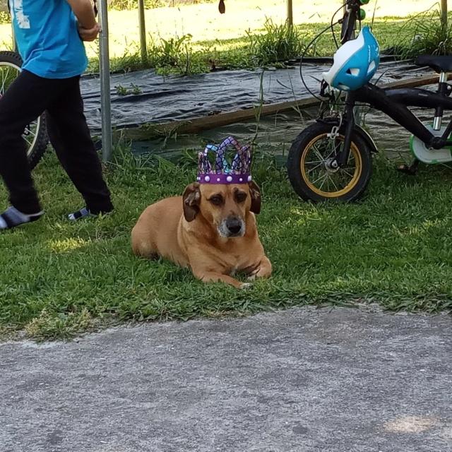 Perro perdido zona Churio , Irixoa Img_2137