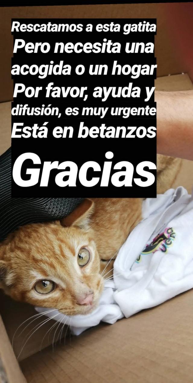 Gatita encontrada en Betanzos Img_2147