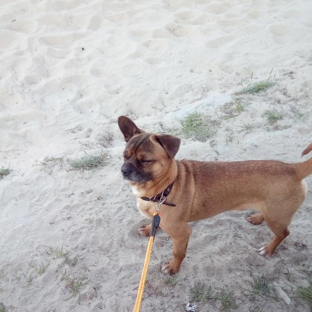 Perro perdido Monte Xalo. Apareció!! Img_2168