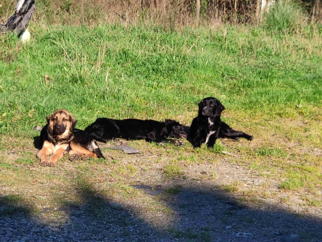 Tres perros perdidos Img_2217