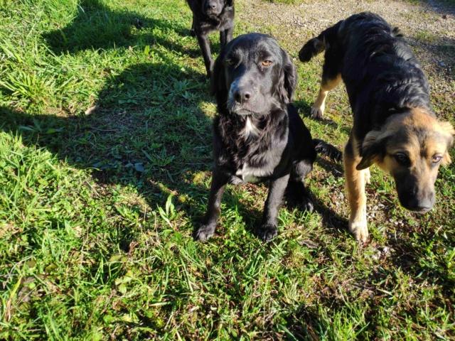 Tres perros perdidos Img_2218
