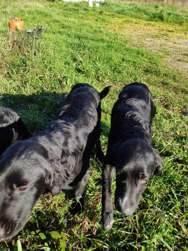 Tres perros perdidos Img_2219