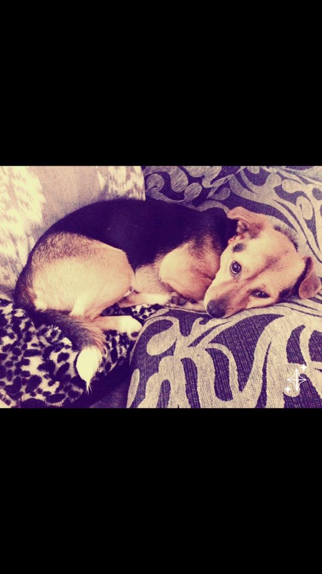 Perro perdido en Miño. Apareció Img_5210