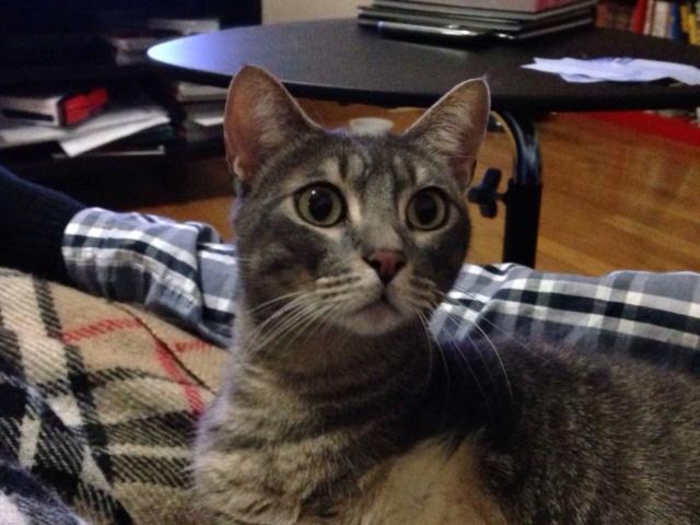 Gato perdido con tres patas en Urbanización Breogan-Feans. Apareció Img_9710