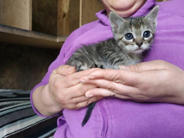 Sólo quedan dos por adoptar!!. Adoptados! Mae_ii11