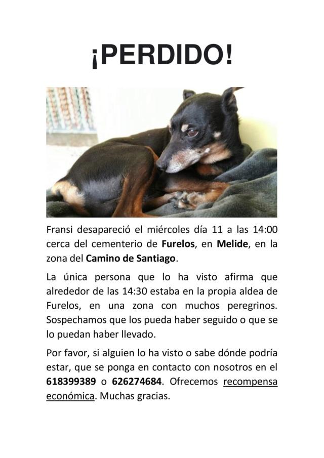 Perro perdido camino de Santiago, Melide Perro_11