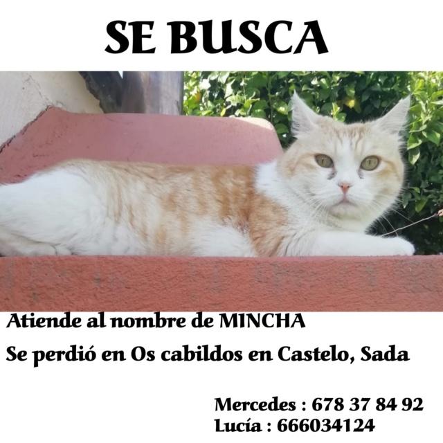 Gato perdido Os Cabildos en Castelo, Sada Photog10