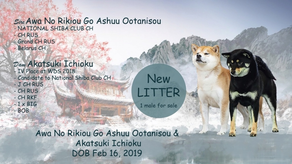 Шенки от пары Akatsuki Ichioku и Awa No Rikiou Go Ashuu Ootanisou Presen10