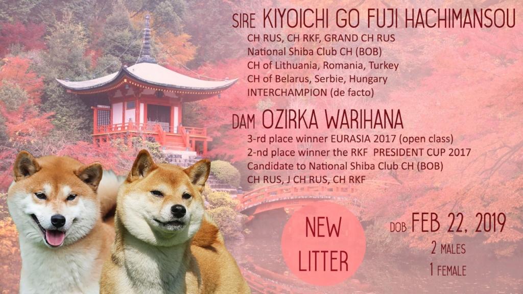 Щенки от Пары Ozirka Warihana и Kijoichi Go Fuji Hachimansou Presen11