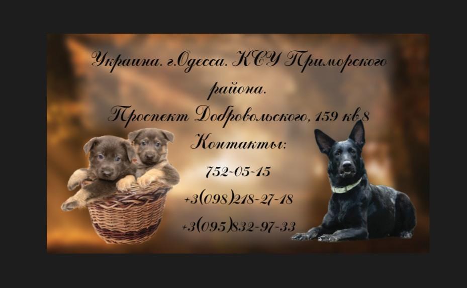 МОЯ ИМПЕРИЯ ВОМ ИСТХАУС.(Одесса) - Страница 4 69744310