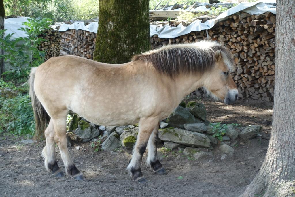 Cosimas Tier-Fotos - Seite 4 Pferd_10