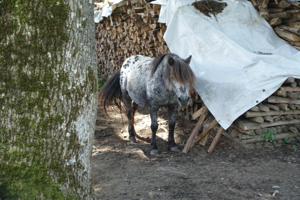 Cosimas Tier-Fotos - Seite 4 Pferd_11