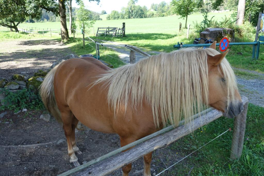 Cosimas Tier-Fotos - Seite 4 Pferd_12