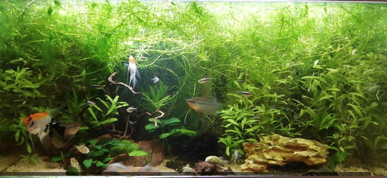 Développement lent et détérioration de mes plantes 310