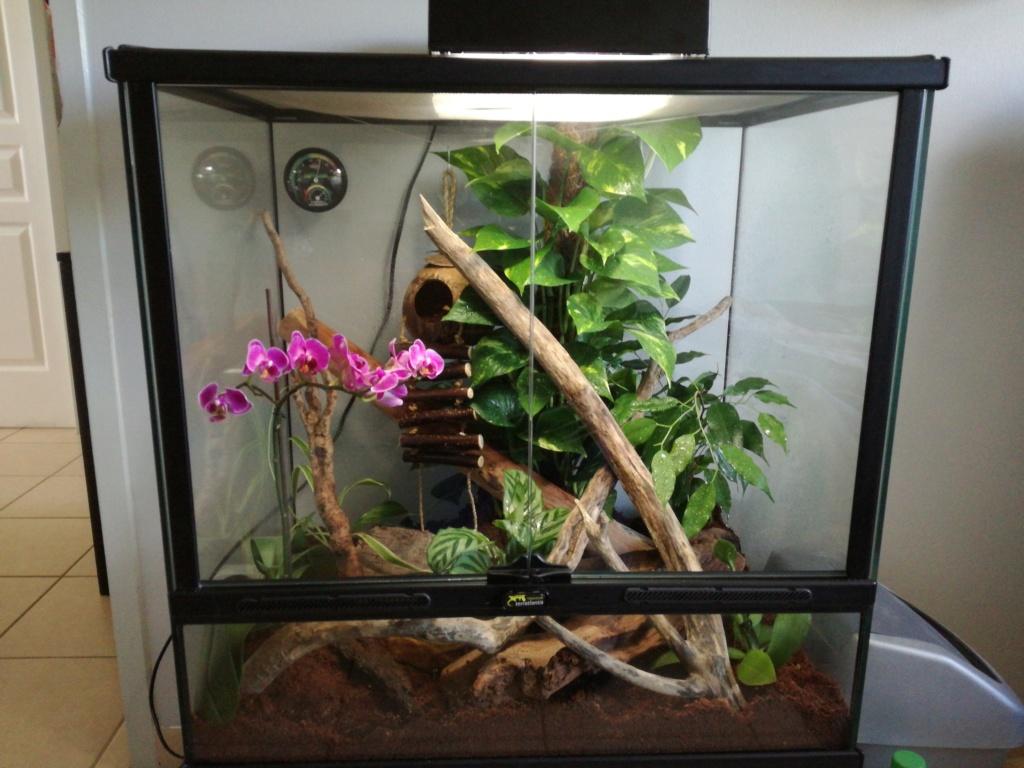 Nouveau gecko 15415011