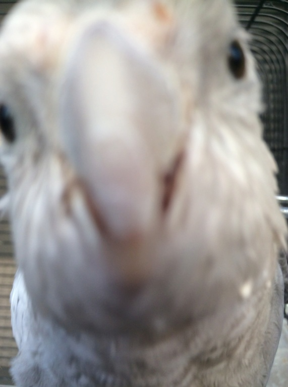 Calo face blanche perléé 17660910