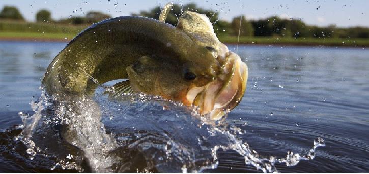 BORN TO FISH! MESSAGE BOARD
