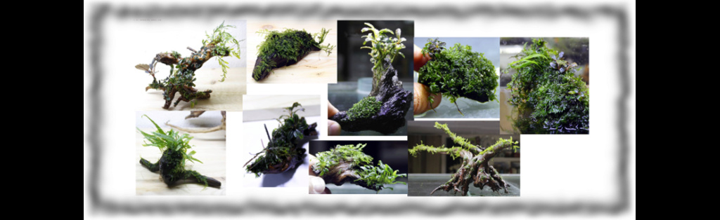 Aquatic mosses and ferns 410