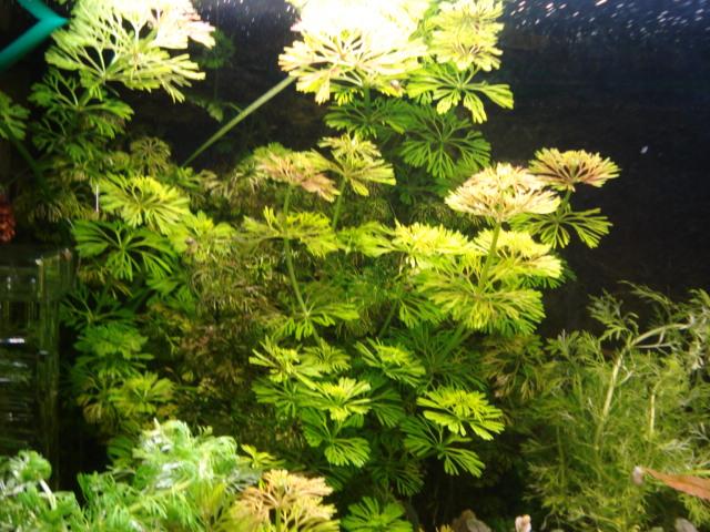 Plantes en jauge Dsc08221