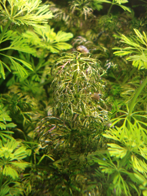 Plantes en jauge Dsc08225