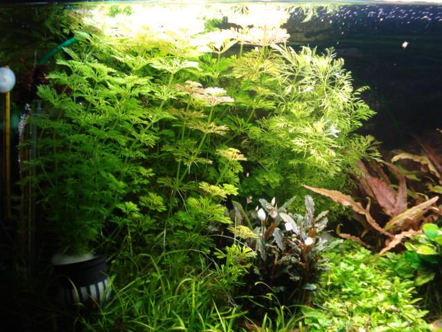 Plantes en jauge Dsc08315