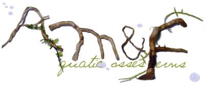 Aquatic mosses and ferns Morett10