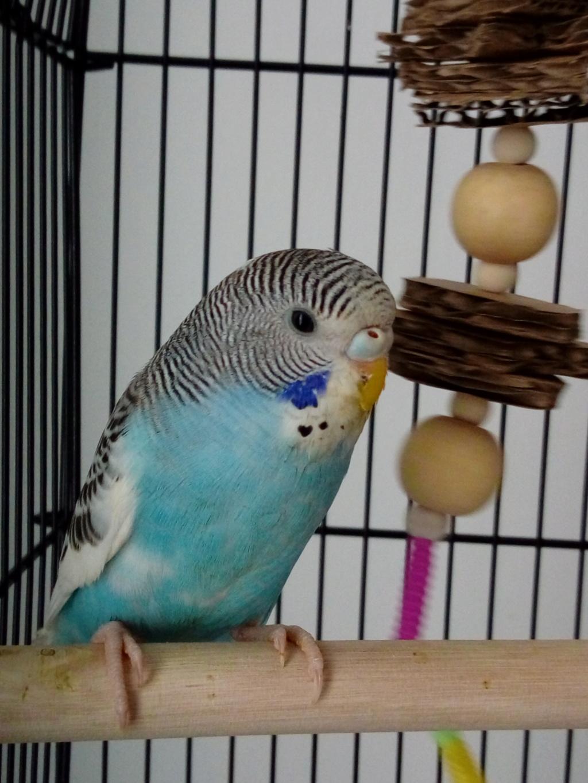 Kiwi et Yuumi 15724410