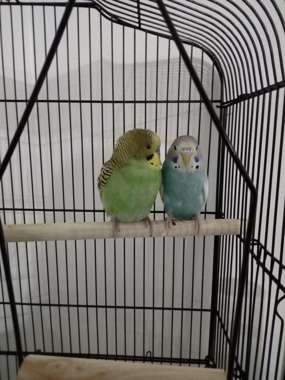 Kiwi et Yuumi Img_2011