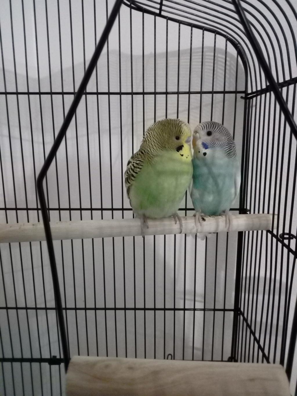 Kiwi et Yuumi Img_2012